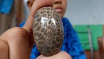 Tipe Dan Khasiat Umum Batu Akik Borneo Bermotif