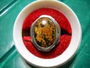 Pirus persia urat emas